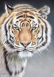 Tiger (Pastel) by Darryn Eggleton -  sized 20x28 inches. Available from Whitewall Galleries